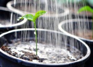 Изготовление живой воды для рассады