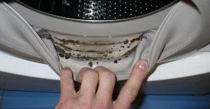 Плесень в стиральной машине: как избавиться как почистить как удалить грибок