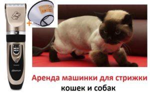 Выбираем кошке машинку для стрижки