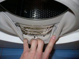 Вредная плесень в стиральной машине: 4 способа, как избавиться