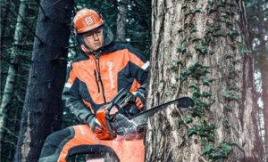 Валка деревьев бензопилой: руководство для начинающих